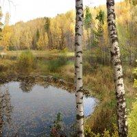 Лесное озеро :: Иля Григорьева