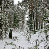 Зима этого года :: Марина Алгаева