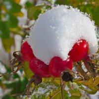 Снег и шиповник 2 :: val-isaew2010 Валерий Исаев