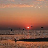 Черные птицы в красном небе :: Лариса Шамбраева