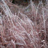 Осень и Зима :: Руслан Резников