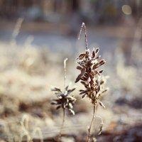 Дыхание зимы :: Татьяна Михайлова