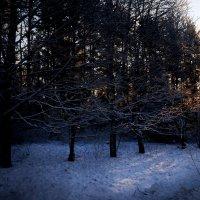 Холодный свет :: Михаил Лобов (drakonmick)