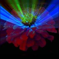 Ночной цветок :: Владимир Хатмулин