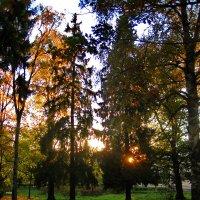 осень :: Ольга Cоломатина