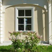 Гортензия под окном :: Наталья (Nattina) ...