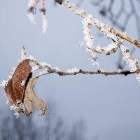 зимушка-зима :: Елена Сюзёва