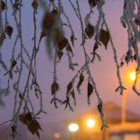 Морозный туман... :: Дмитрий Гортинский