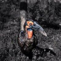 Разновидность ворона :: Lasc1vo Артёмин