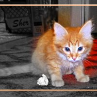 Когда Персик был маленьким... :: Елена Федотова
