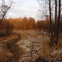 IMG_5801 - Ну, очень поздняя осень! :: Андрей Лукьянов
