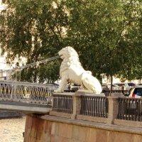 Пройти мимо не получится: львов заметишь. :: Владимир Гилясев
