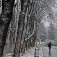 Начало зимы :: Евгения Кирильченко