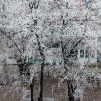 Зима идет... :: Ирина