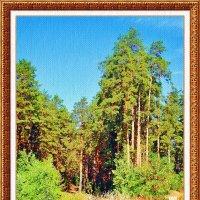 Зарисовки в лесу :: Лидия (naum.lidiya)