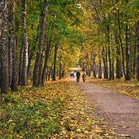 Золотая осень в парке. :: Горбушина Нина