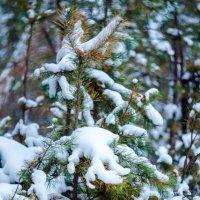 зима :: Pavel Markov