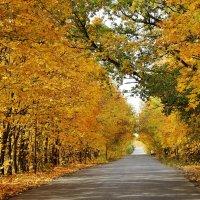 Осенняя дорога :: Дмитрий Фадин
