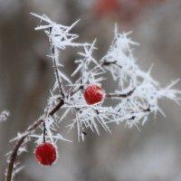Снежные иглы :: Ната Волга