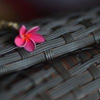 Розовая плюмерия :: Юлия