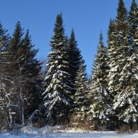 Лес в ноябре :: Вера Андреева