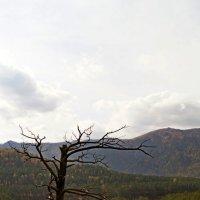 Слияние Чемала и Катуни :: Кристина Воробьева