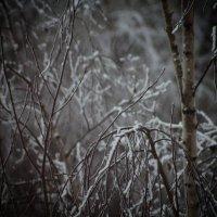 Питерский ноябрь :: Валерия Лидерман