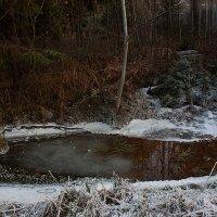 Ноябрьские заморозки :: Татьяна Суетина