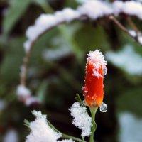 Первый снег :: Галина Galina