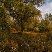 Осенние заросли. :: Moloh.75 Евгений