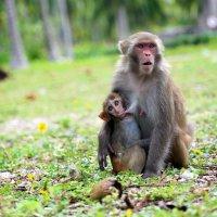 Жители Острова  Hon Lao (Monkey Island) Vietnam :: Igor Kazanskiy