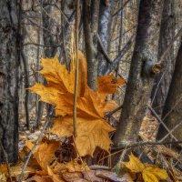 лесная композиция из листьев :: лиана алексеева
