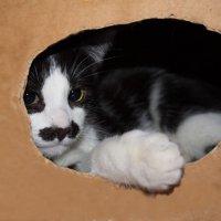 В картонном домике :) :: валерия