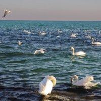 Лебединое царство. :: Ирина Нафаня