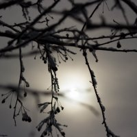 зимнее солнце :: Ирина Гракова