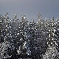Сказочный лес :: Мария Парамонова