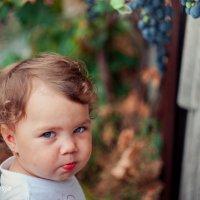 """""""лиса"""" и виноград :: Тася Тыжфотографиня"""