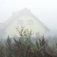 утро туманное :: konstantin tatonkin