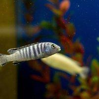 про рыбок :: gribushko грибушко Николай