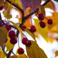 Осенью... :: Марина Алгаева