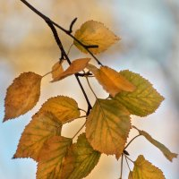 Осеннее. :: Горбушина Нина