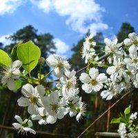 Вспоминая весну :: Лидия (naum.lidiya)