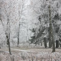 Белый день :: Ната Волга