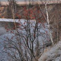 костер рябины красной :: sergej-smv