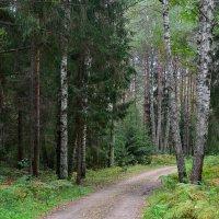 Смешанный лес :: Miola