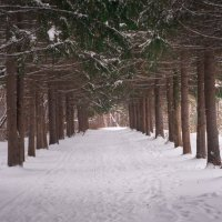 начало зимы :: Павел Павел
