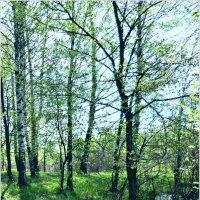 Весенний лес. :: Владимир Валов