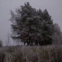 Туман :: Александр Ладыгин