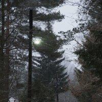 Осенний туман :: Aнна Зарубина