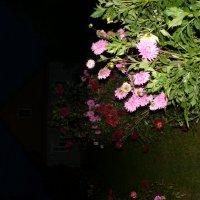цветущая осень :: elenka lenina